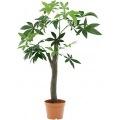 観葉植物 パキラ 朴の木タイプ 高さ150cm グリーン