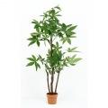 観葉植物 パキラ スタンダード 高さ172cm グリーン